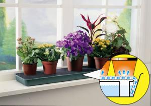 20% OFF Windowsill Self Watering Trays